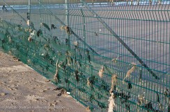seaweed and fencing
