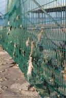 Seaweed on fence