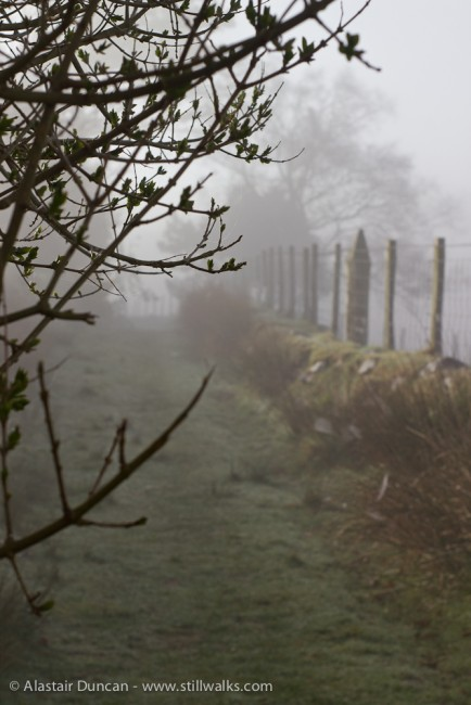 mist and fence