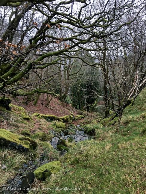 Lledr Valley, Snowdonia