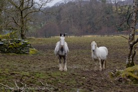 Lledr Valley Horses