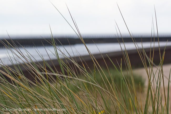 dune grass and Tawe river mouth