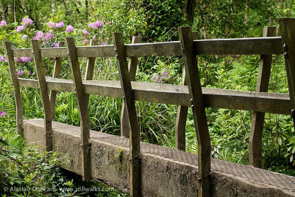 wooden woodland footbridge