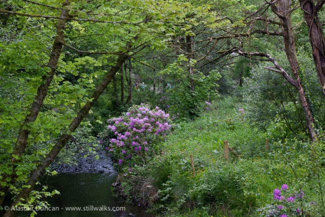 Penllergaer Woods-8