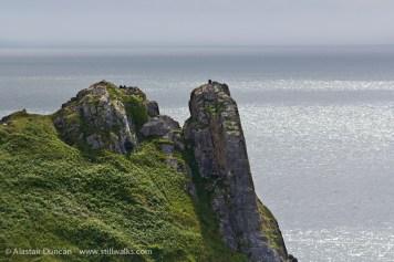 Tor Bay cliffs