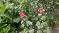 French Garden Walk - Screenshot