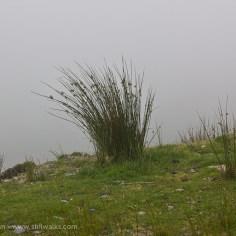 Mist and grass