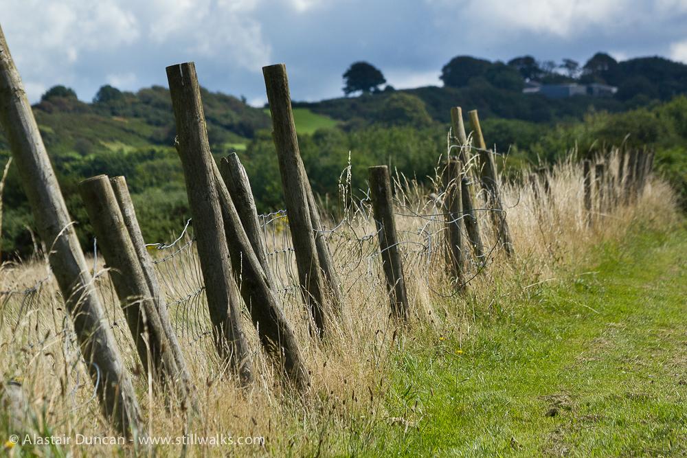 salt marsh fence