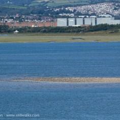 sandbank and birds