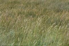 Pennard Pill Grasses