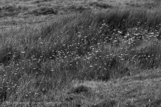 Monochrome grasses