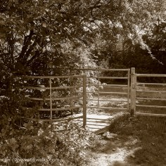kissing gate sunshine