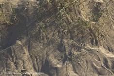 beach grass shadows