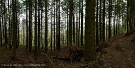 February forest trees
