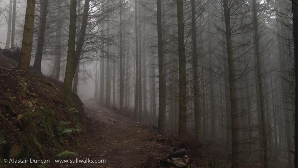 February forest fog