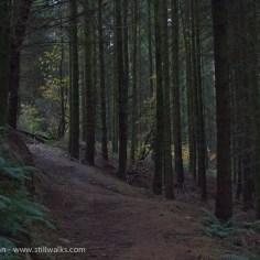 Murky Forest in November