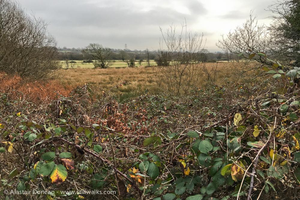low lying landscape