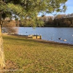 Lakeside tree and gulls