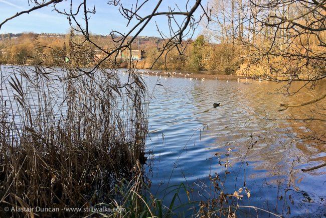 urban lakeside