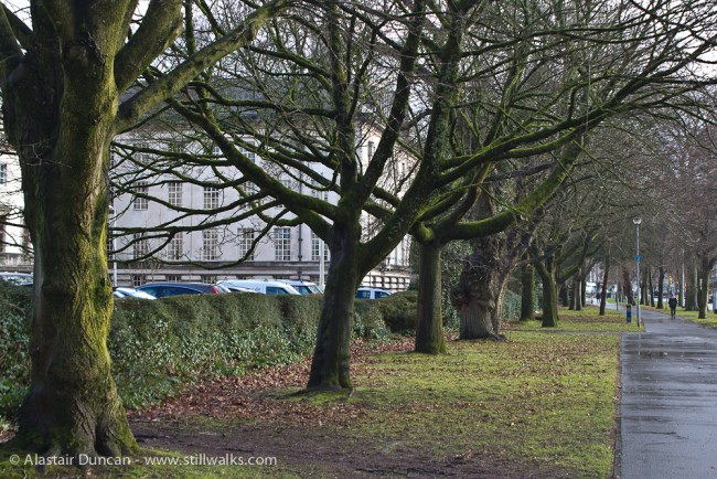 Cardiff tree perspective