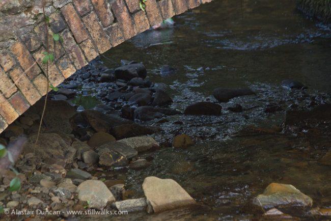 River Camffrwd and bridge