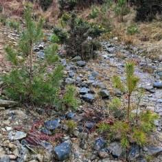 steep hillside track