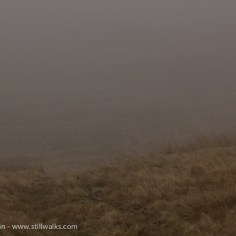 the Mawr and the mist