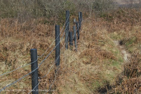 Oxwich Burroughs fence