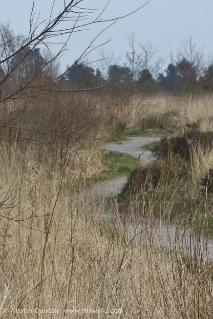 lakeside footpath