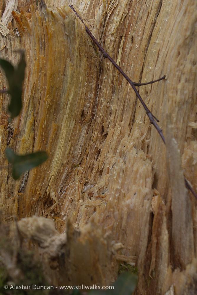 tree stump interior details