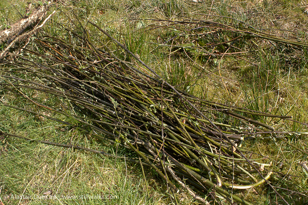Willow withies
