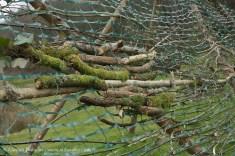 Mossy woodland weaving patterns