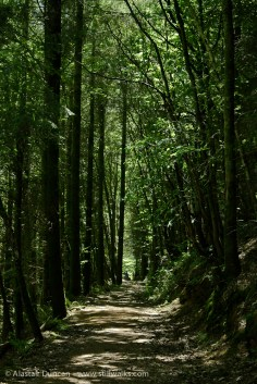 Forest footpath descent