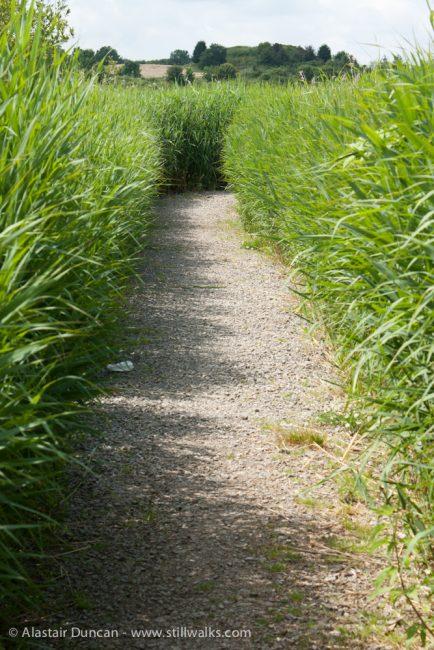 Marsh path 2010