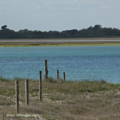 Pagham Harbour fence