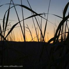 Marsh grass and sunset