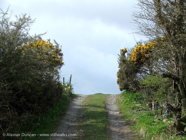 Galloway coastal lane