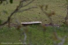 bath in a field