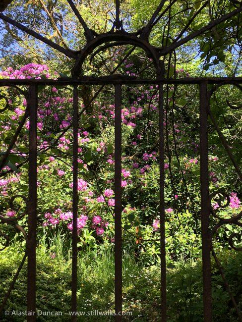 Gate in Cally Gardens