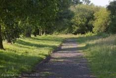 walking through the park