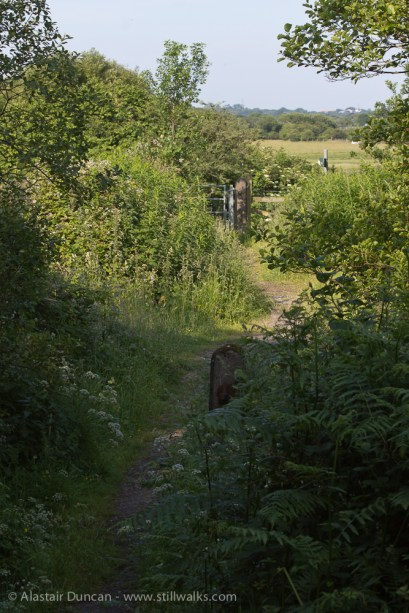 walk to the marshes