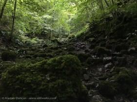 mossy rocky terrain