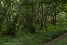 valley woodland
