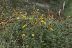 wildflower marsh plants