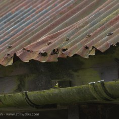 rusty roof