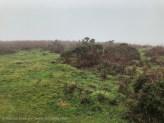 Gower landscape