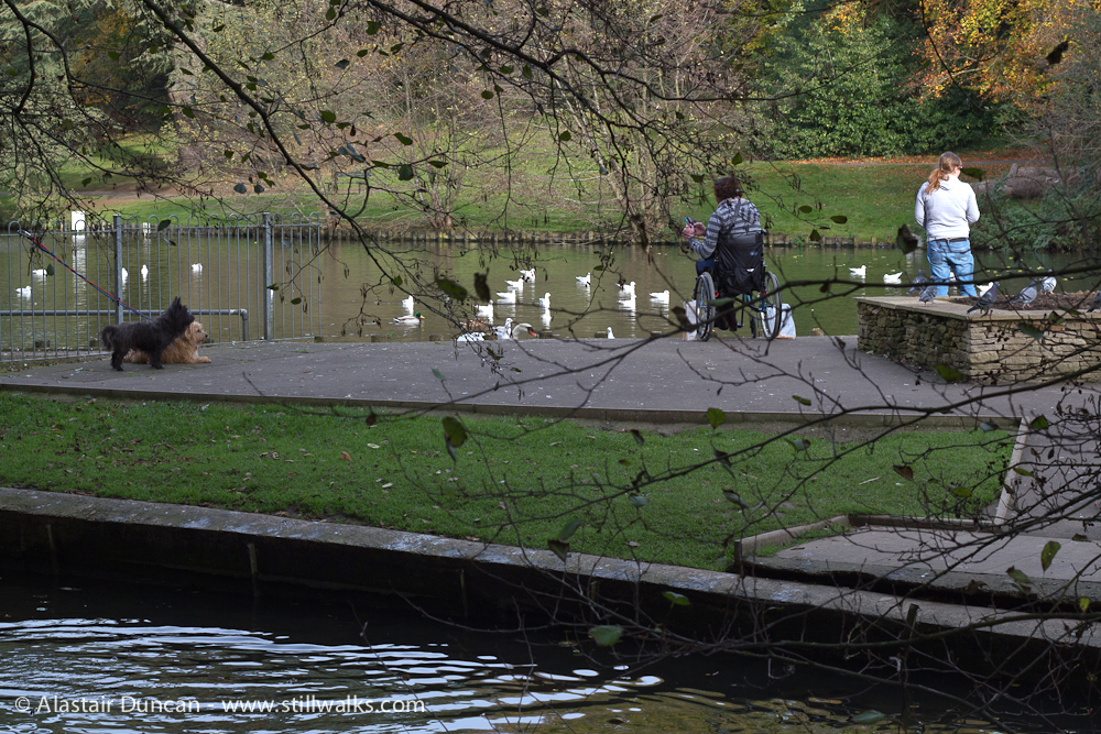 feeding the ducks and swans
