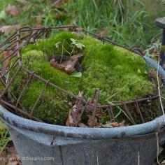 A bucket of moss