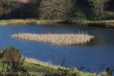 reed island