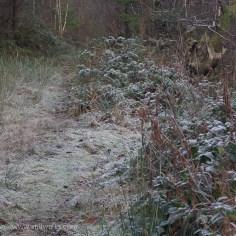 frosty footpath